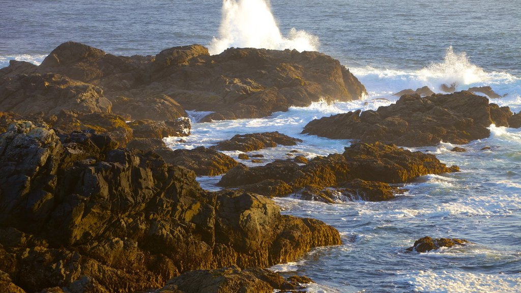 Wild Pacific Trail showing rugged coastline and surf