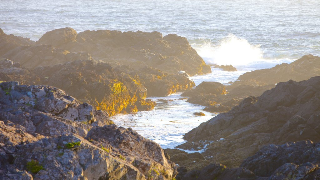 Wild Pacific Trail showing rugged coastline