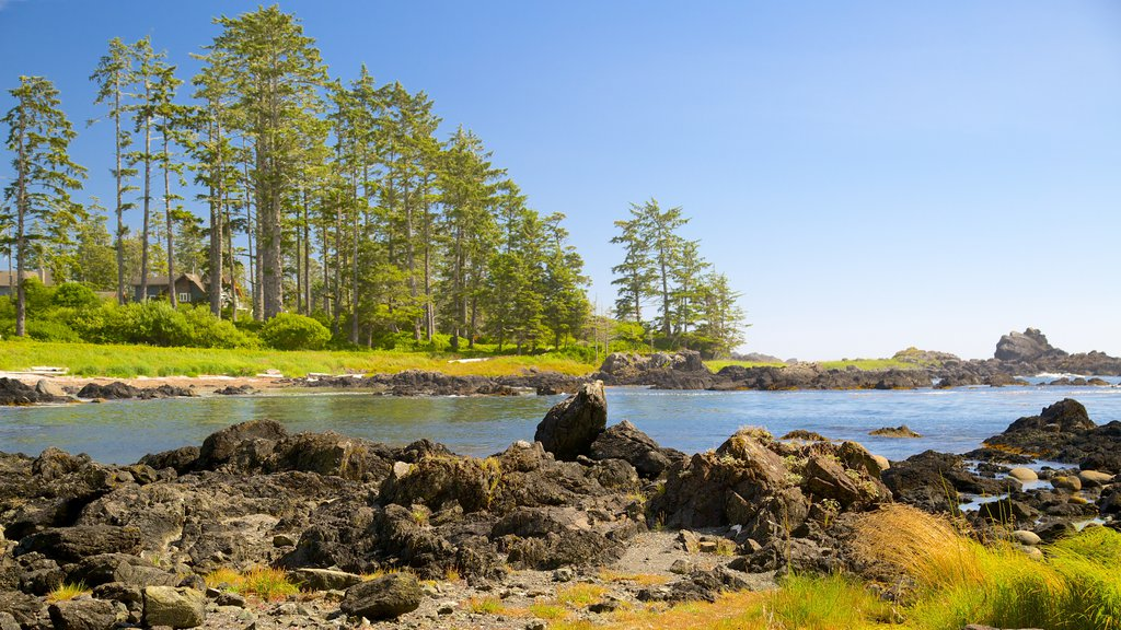 Ucluelet Big Beach showing a river or creek and a lake or waterhole