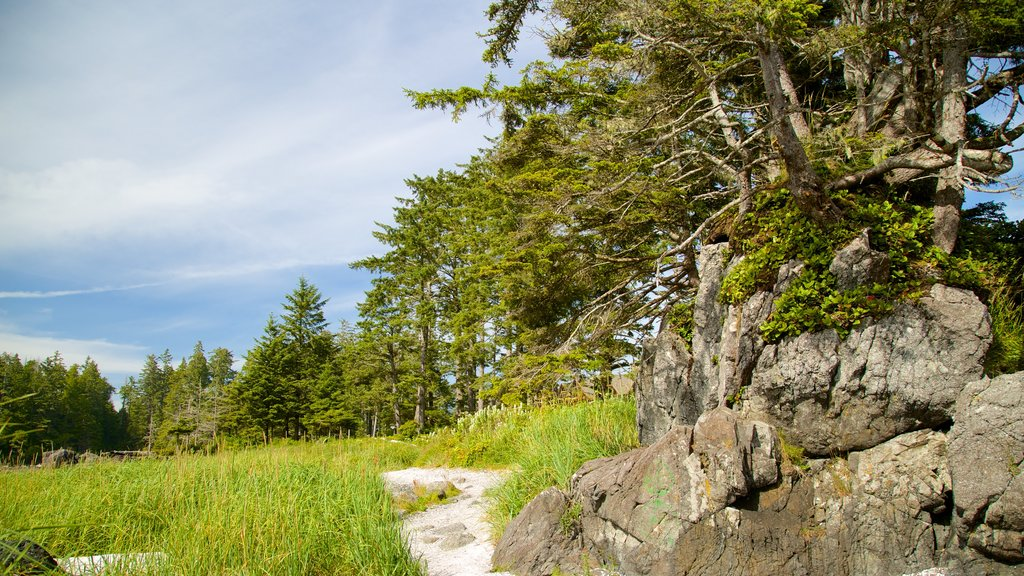 Ucluelet Big Beach which includes forest scenes