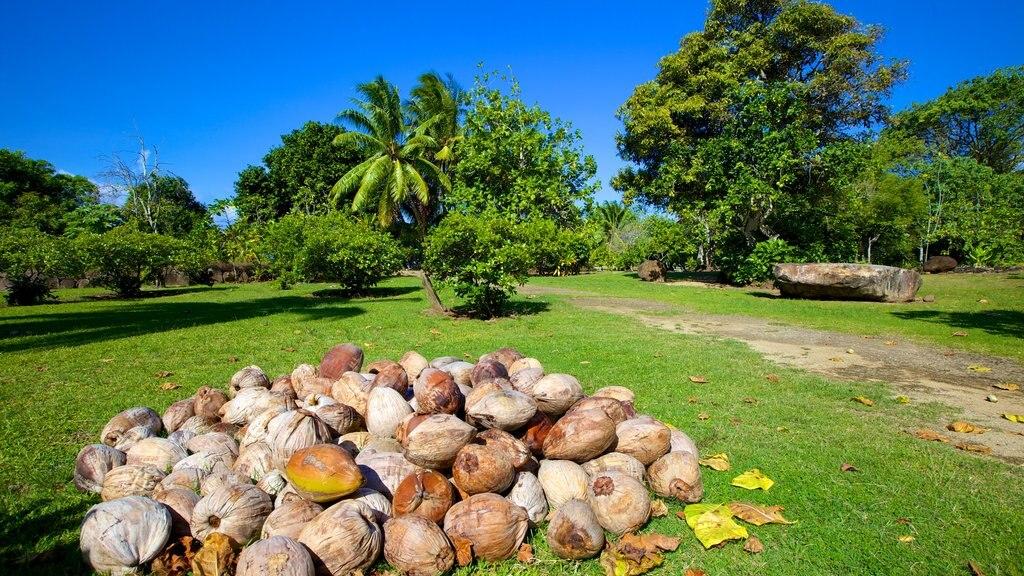 Marae Taputapuatea showing a park