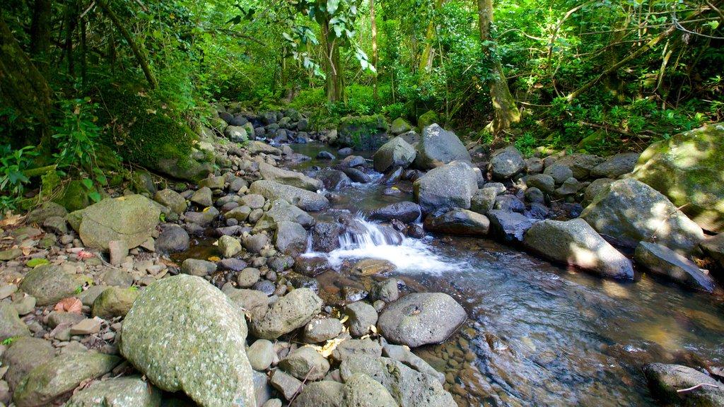 Raiatea que incluye selva y un río o arroyo
