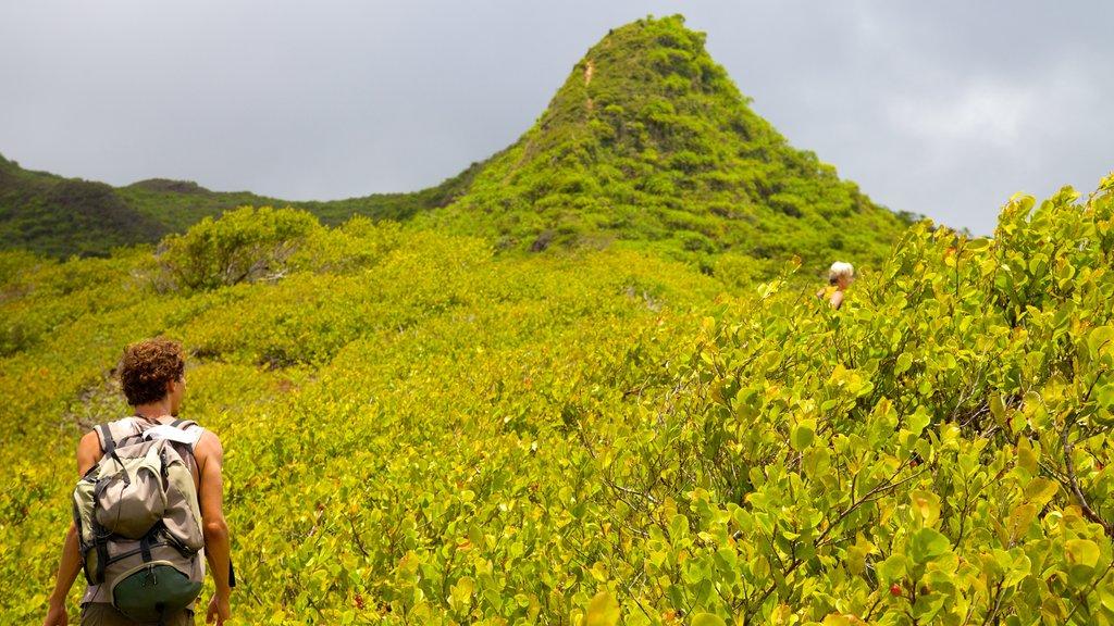 Raiatea showing hiking or walking as well as an individual male