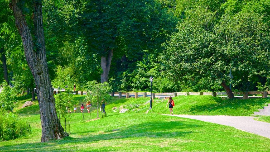 Central Park showing a garden