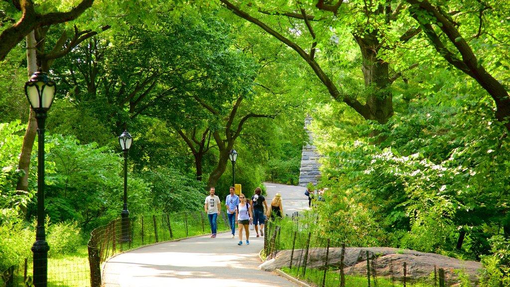 Central Park featuring a park