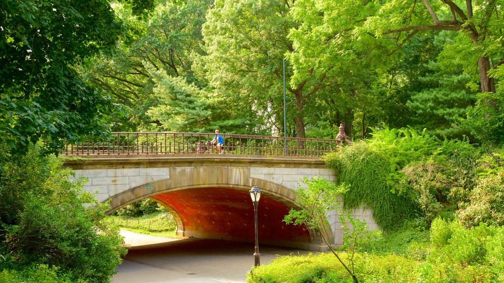 Central Park which includes a garden and a bridge