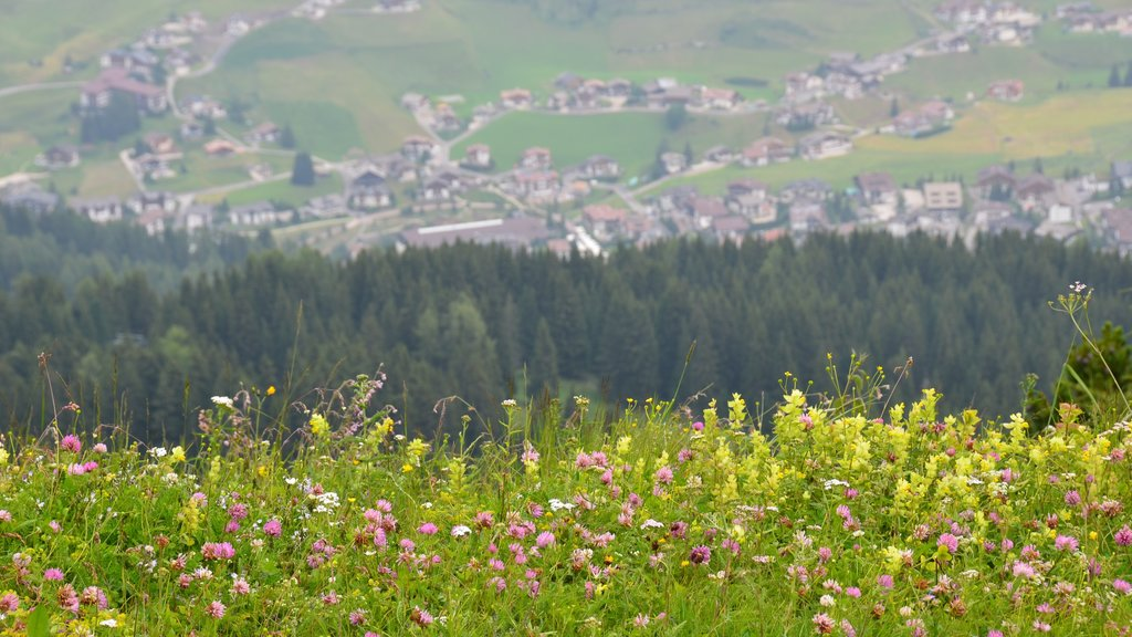 Ciampino-Sella Ski Area featuring wildflowers and flowers