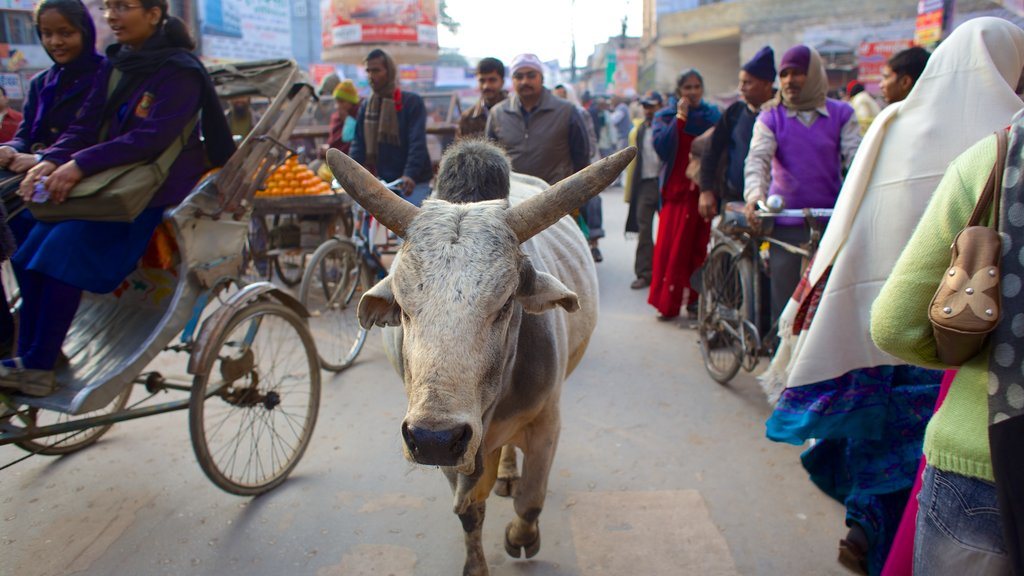 Varanasi showing markets, land animals and street scenes