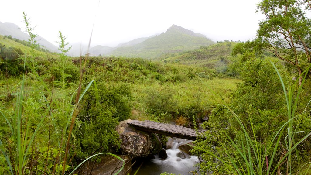 Drakensberg Mountains featuring a river or creek, tranquil scenes and mist or fog