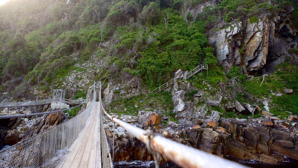 Tsitsikamma National Park showing a suspension bridge or treetop walkway