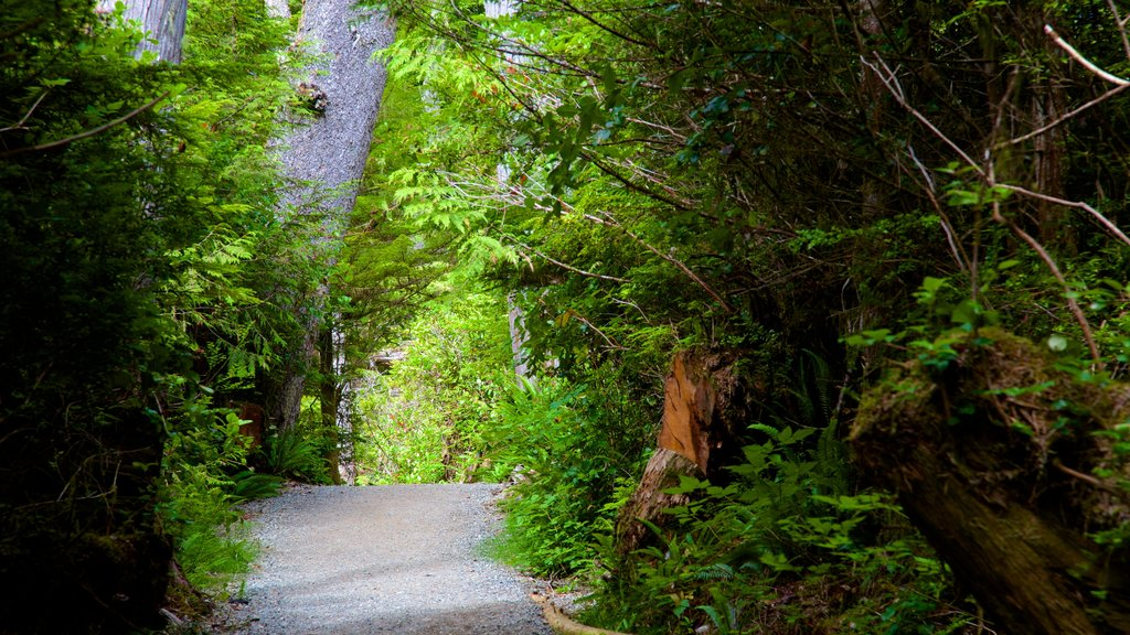 Pacific Rim National Park Reserve which includes a garden