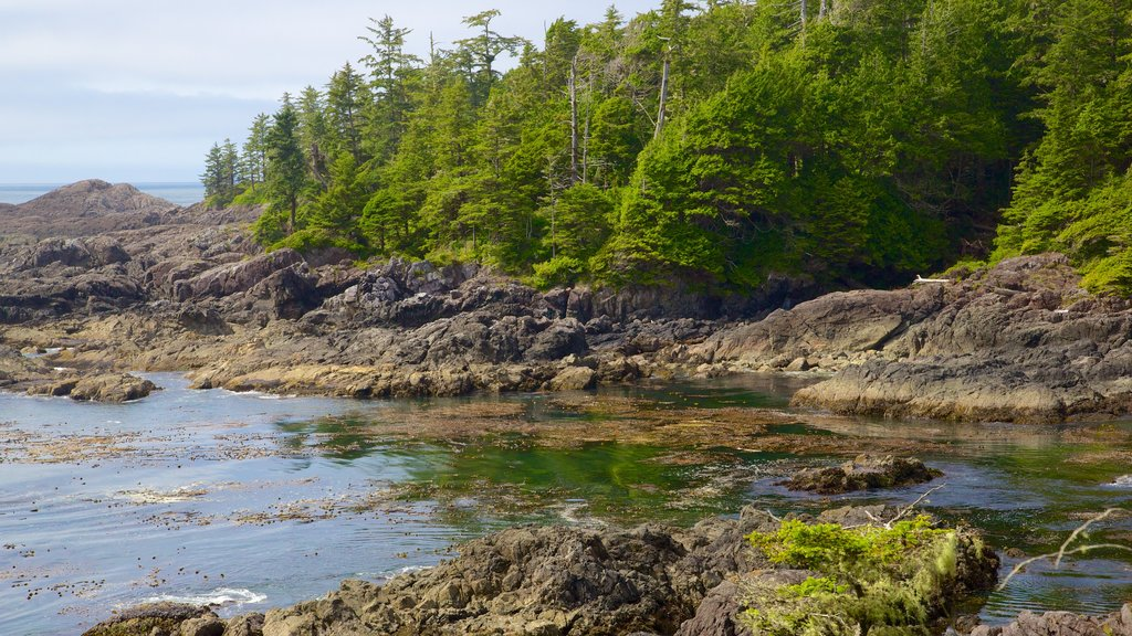 Pacific Rim National Park Reserve which includes general coastal views and forests
