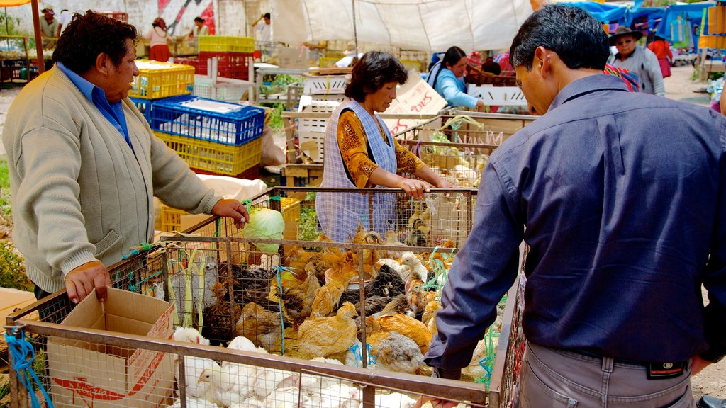 Urubamba which includes bird life and markets