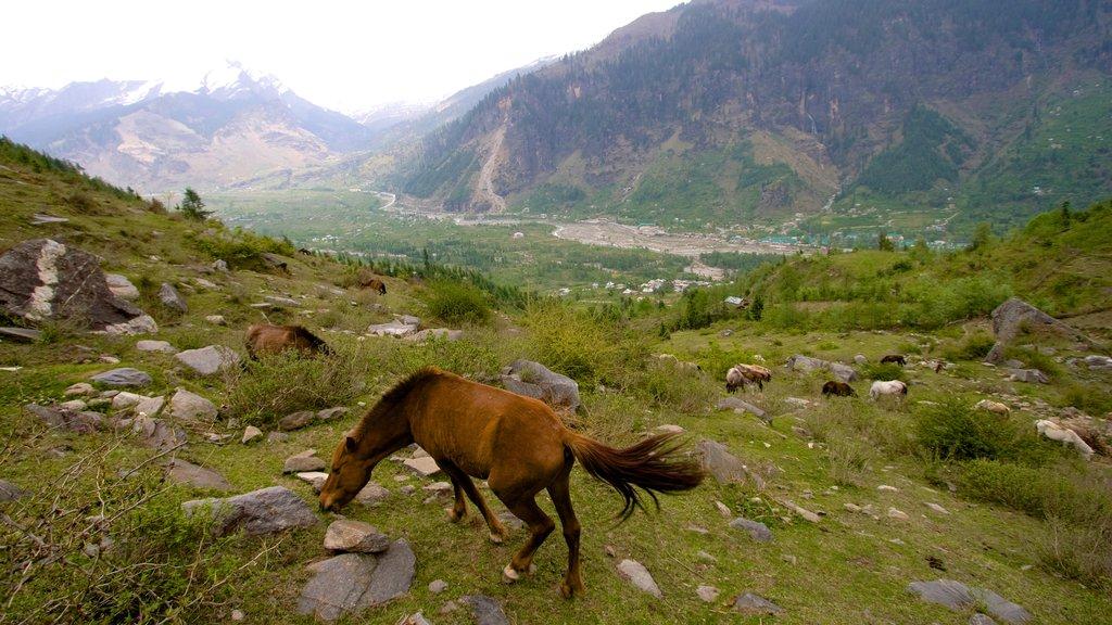 Manali ofreciendo animales, animales terrestres y escenas tranquilas