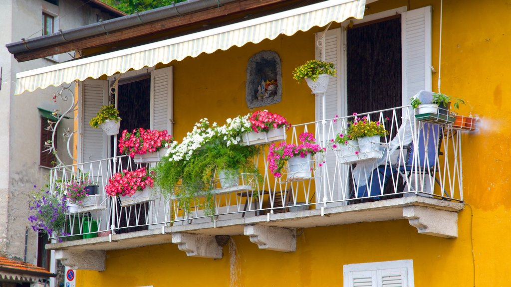 Argegno showing a house and flowers