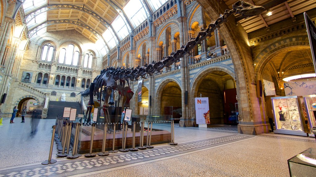 London Natural History Museum showing heritage elements, interior views and heritage architecture