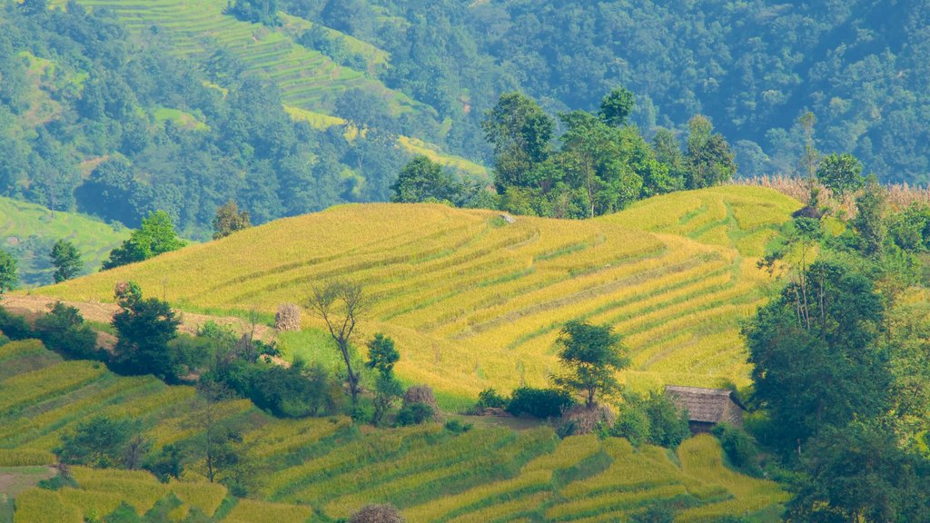 Nagarkot showing farmland and tranquil scenes