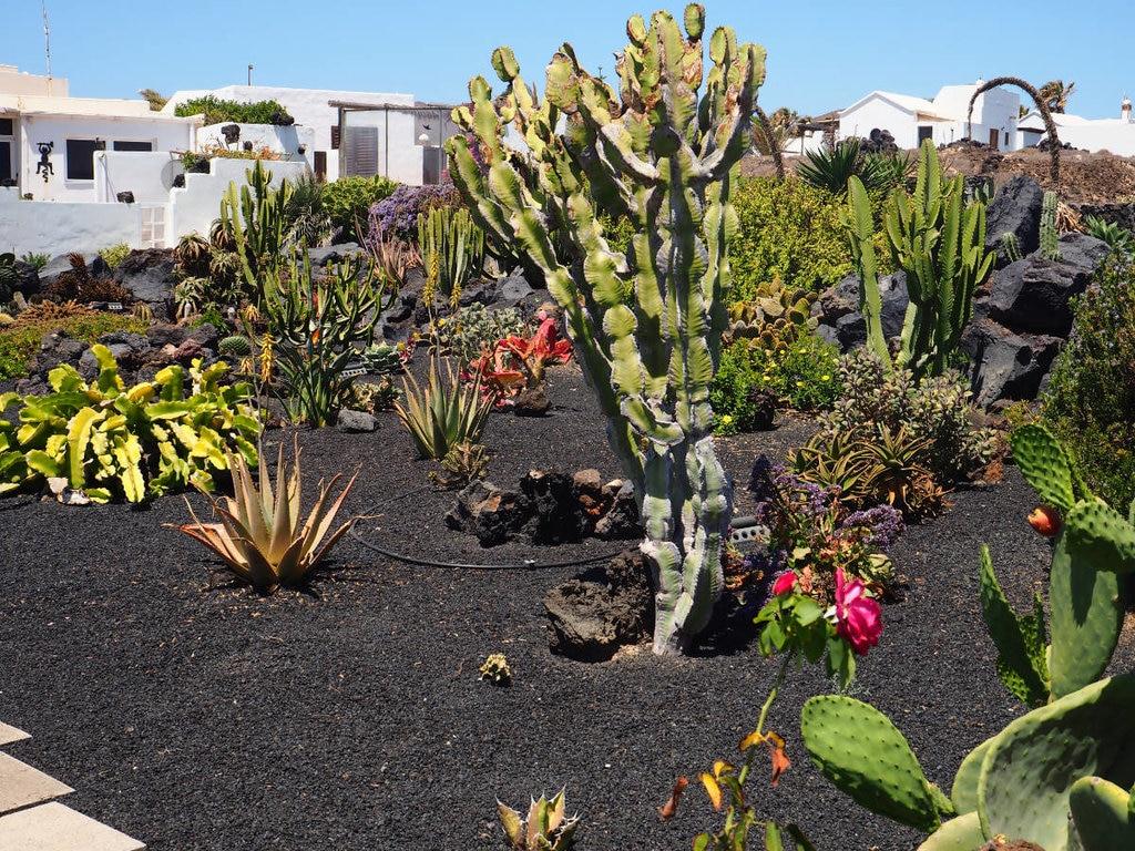 Giardino di cactus - Silvia Romio Photography