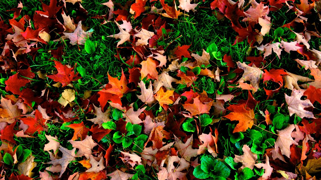 Maine mostrando hojas de otoño