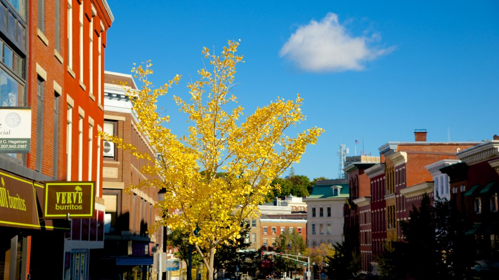 Bangor featuring autumn leaves and a city