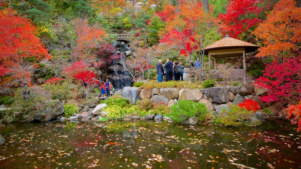 Anderson Japanese Gardens which includes fall colors, a pond and a garden