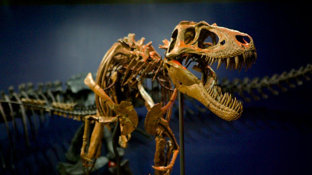 Burpee Museum of Natural History showing interior views