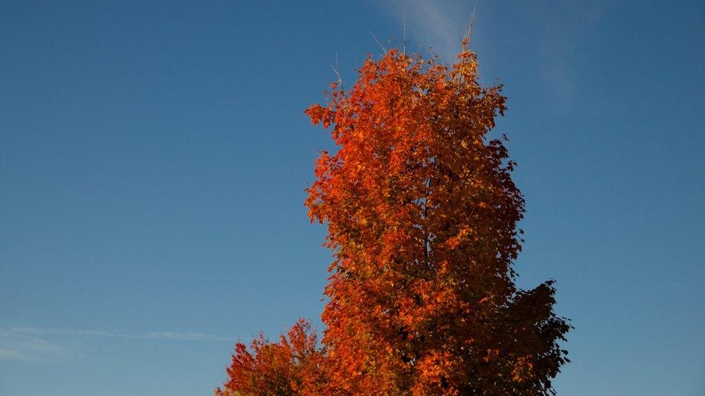 Conway ofreciendo hojas de otoño