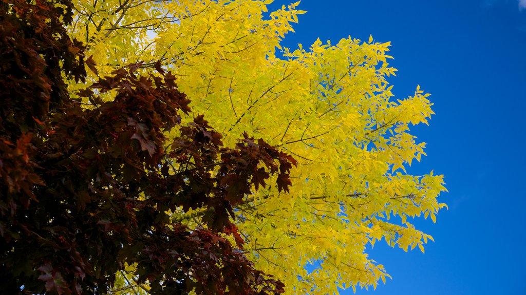 Lake George que incluye los colores del otoño
