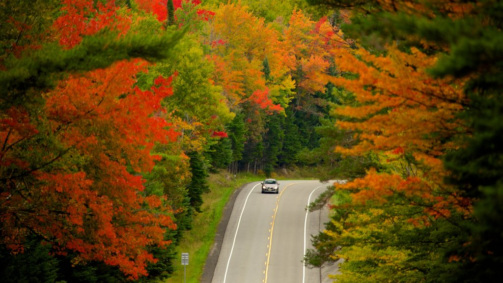 Lake George showing forests, fall colors and vehicle touring