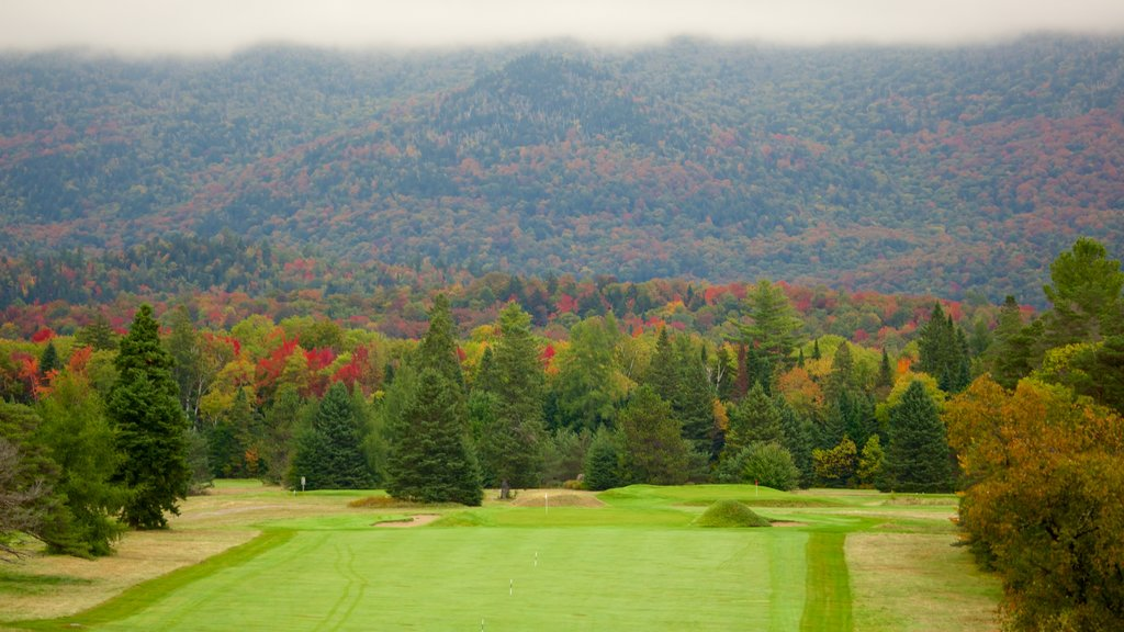 Lake Placid showing forests, golf and tranquil scenes
