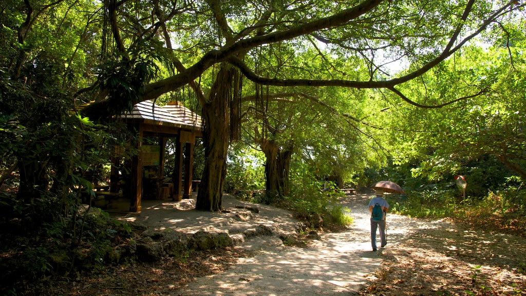 Caishan Natural Park featuring a garden