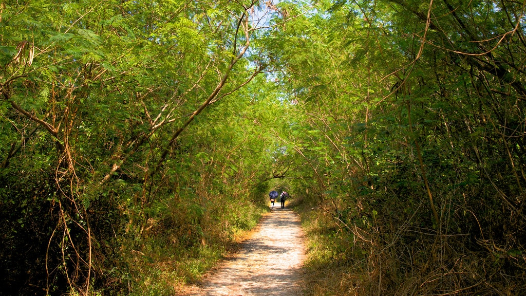 Gushan District featuring tranquil scenes and hiking or walking as well as a couple