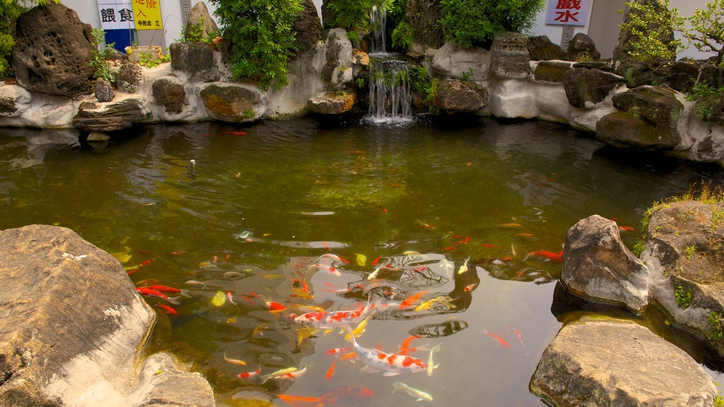Paochueh Temple showing a pond and marine life