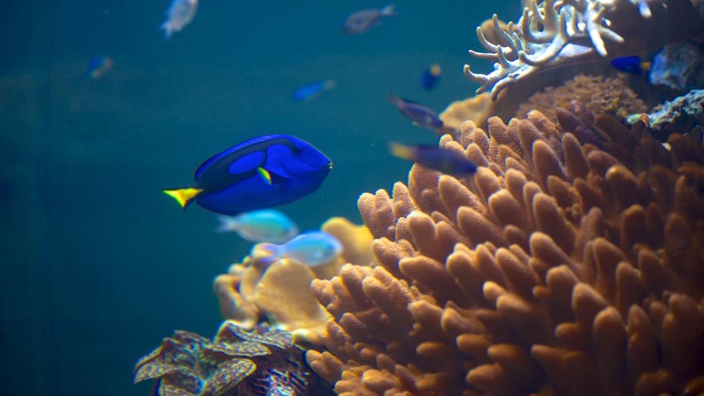 Museo nacional de biología marina y acuario mostrando vida marina