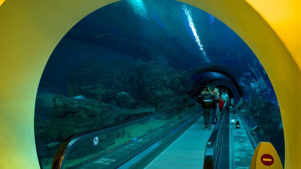 Museo nacional de biología marina y acuario que incluye vida marina