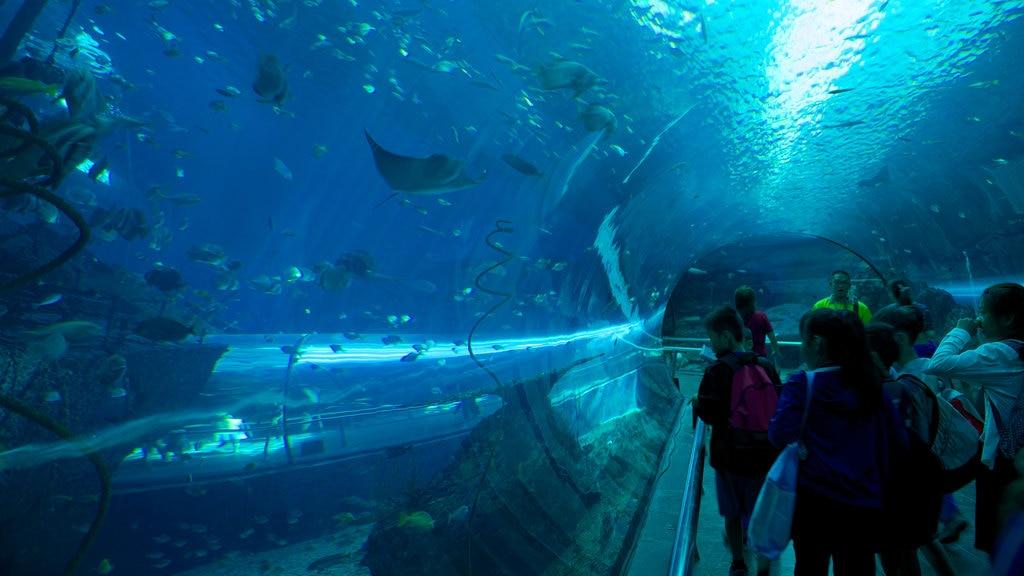 Museo nacional de biología marina y acuario ofreciendo vida marina