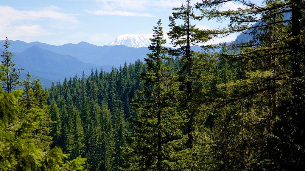 Parque Nacional del Monte Rainier mostrando escenas tranquilas y bosques