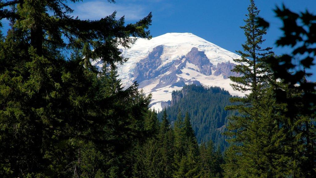 Parque Nacional del Monte Rainier que incluye escenas forestales, nieve y escenas tranquilas
