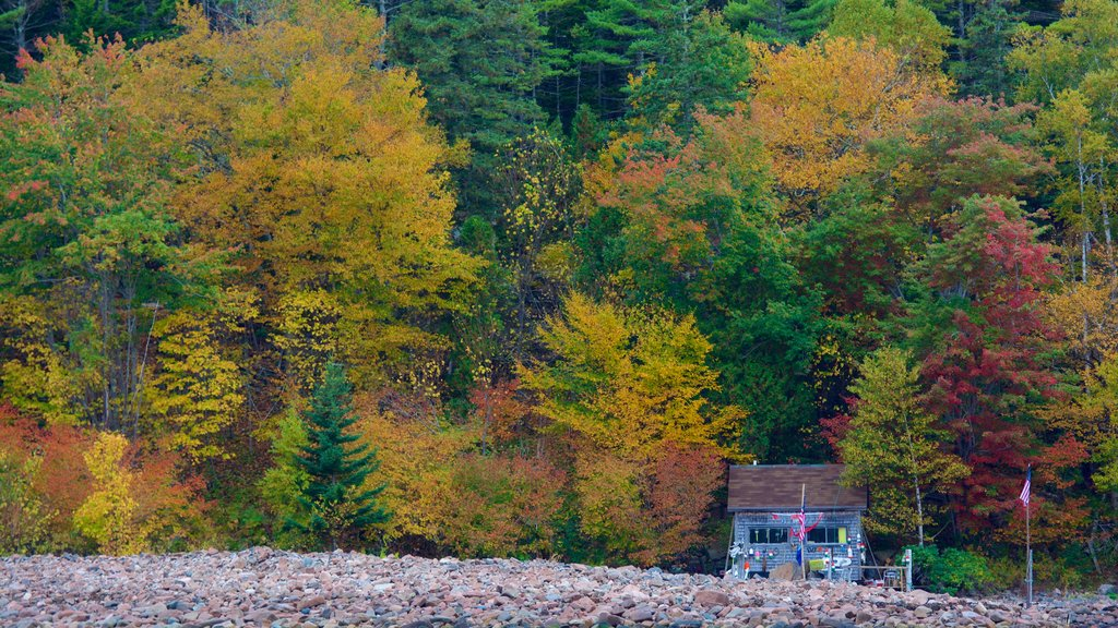Acadia - North Coast which includes fall colors, forest scenes and a house