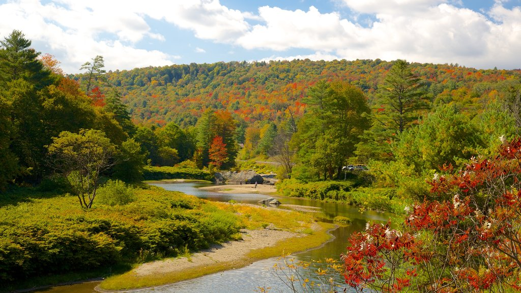 Northern Vermont featuring forest scenes, a river or creek and autumn leaves