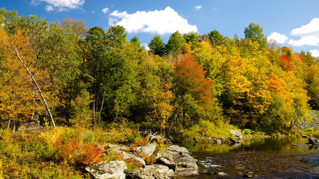 Northern Vermont showing tranquil scenes, a river or creek and forest scenes