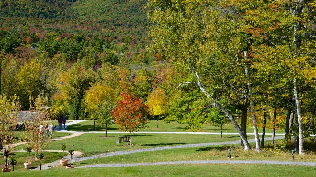 Vermont Meridional mostrando un jardín y hojas de otoño