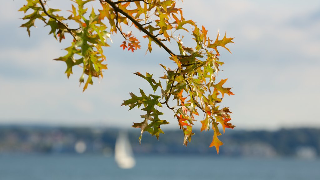 Erie featuring autumn leaves