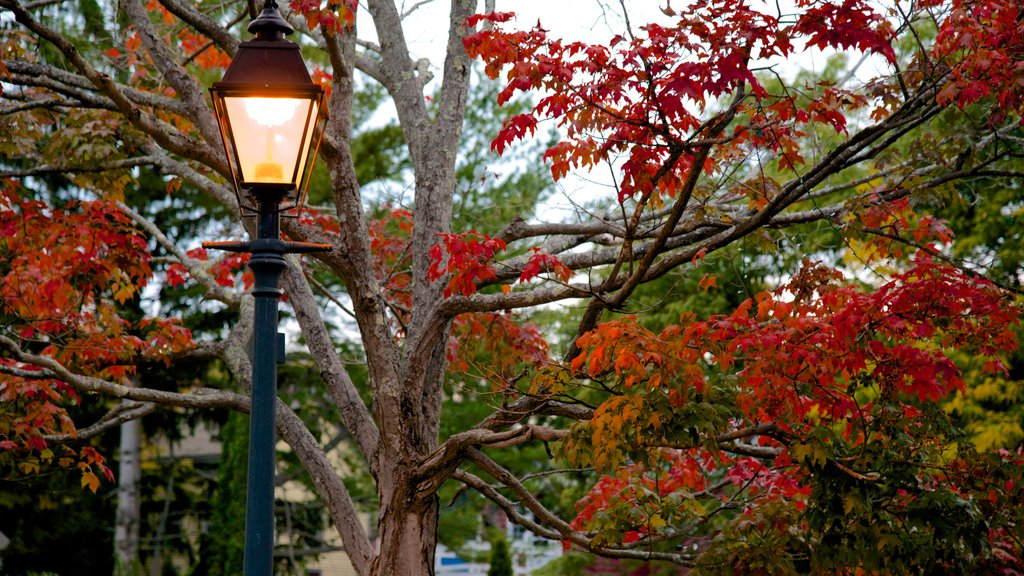 Marblehead featuring autumn leaves