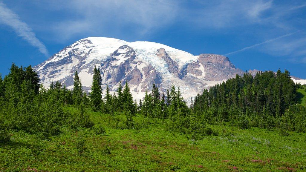 Paradise showing mountains