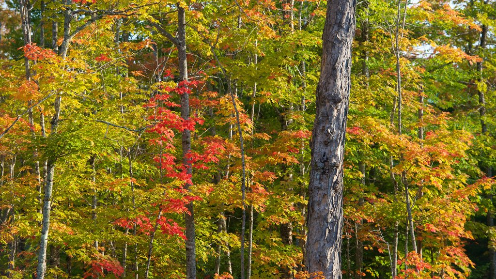Rangeley which includes fall colors and forest scenes
