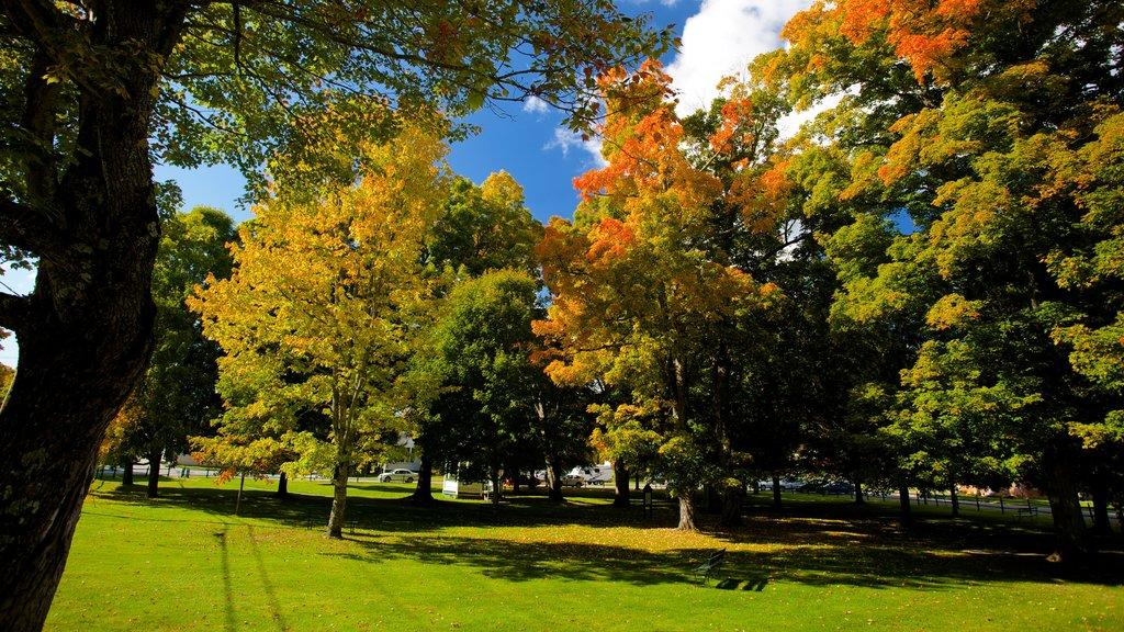 Weston mostrando los colores del otoño y un jardín