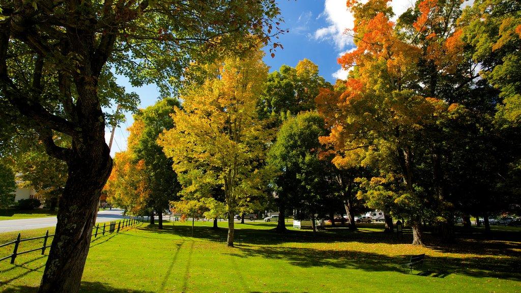 Weston ofreciendo un jardín y hojas de otoño