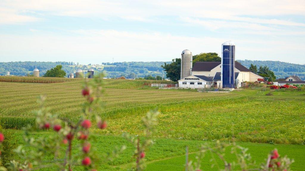 Intercourse showing landscape views and farmland