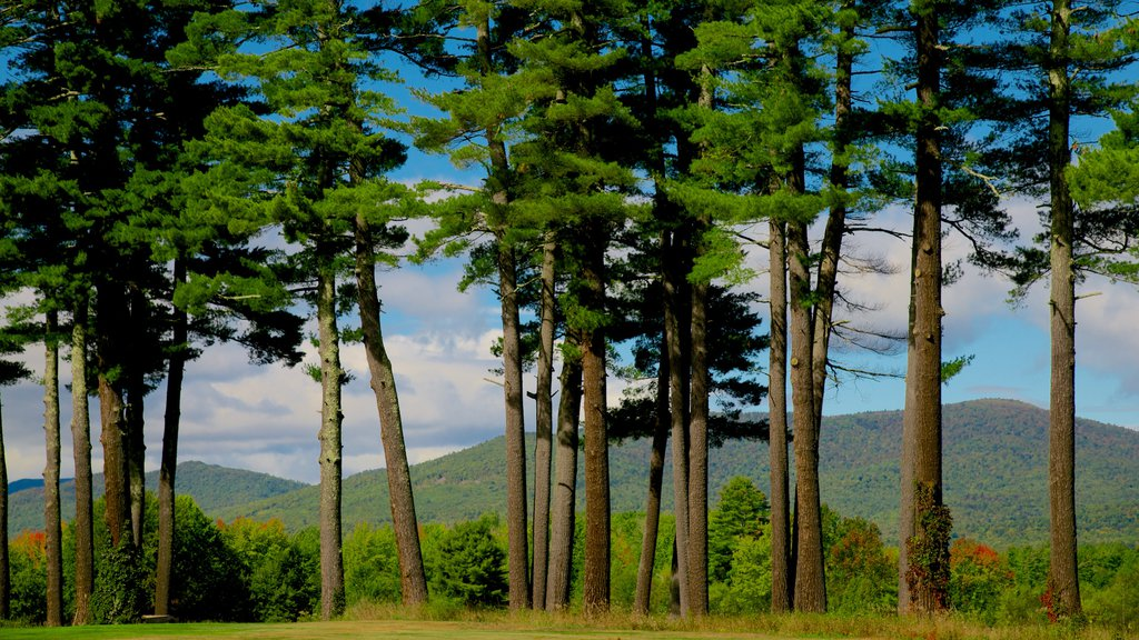Fryeburg showing forests